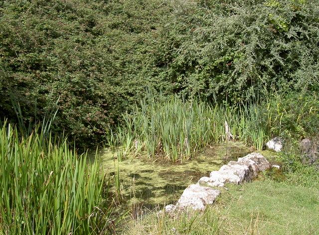 Tim's pond?