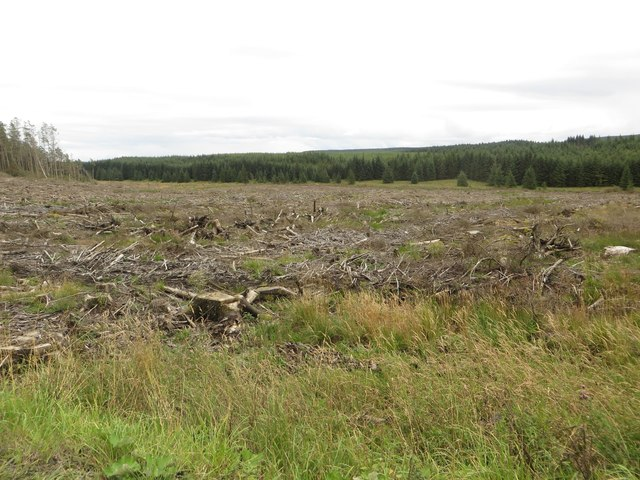 Clear felled area of forest, Wark Forest