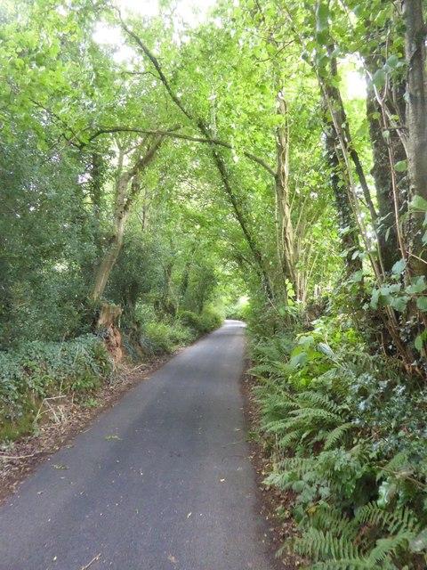 Catshill Head, the road west of Shotash