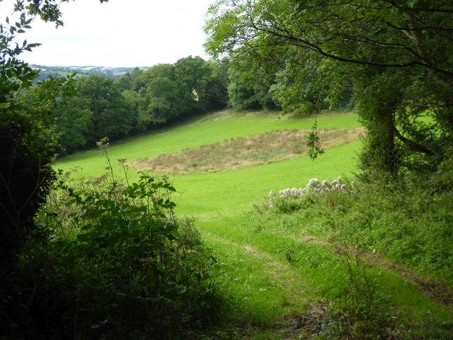 A patch of scrub in a field of grass