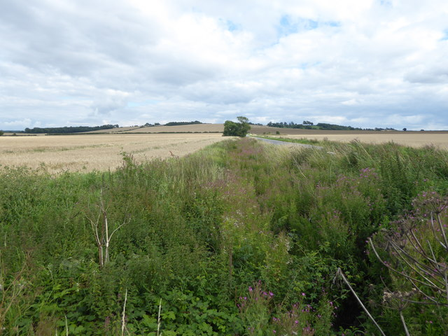Roadside ditch next to Gorse Hill Lane