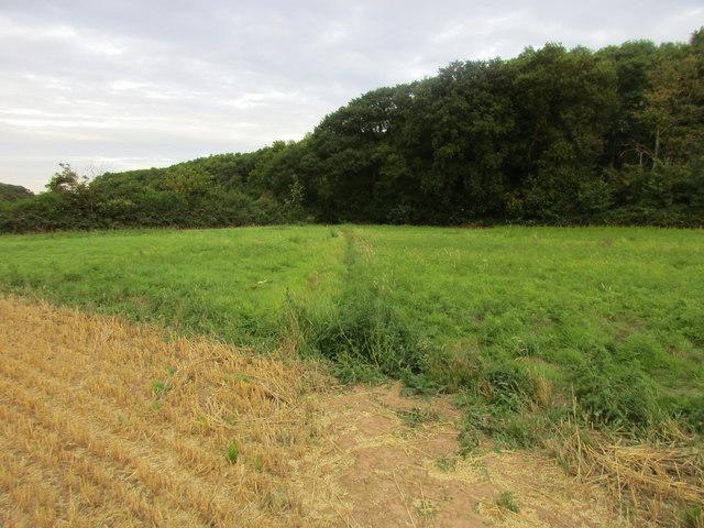 Approaching Mather Wood