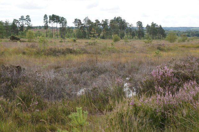 Thursley Common near Pudmore Pond