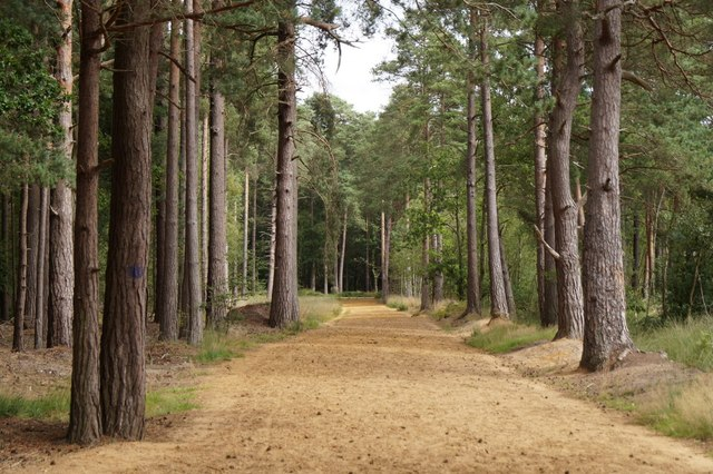 Track through the trees on Elstead Common