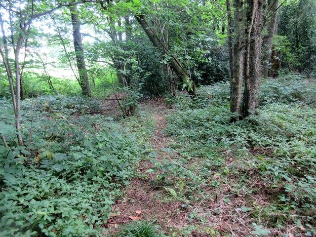 Footpath to Raffling Wood