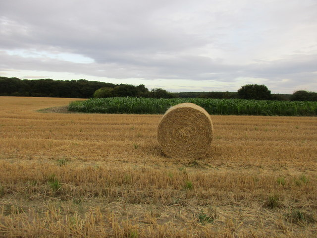 Stubble, straw bale and maize