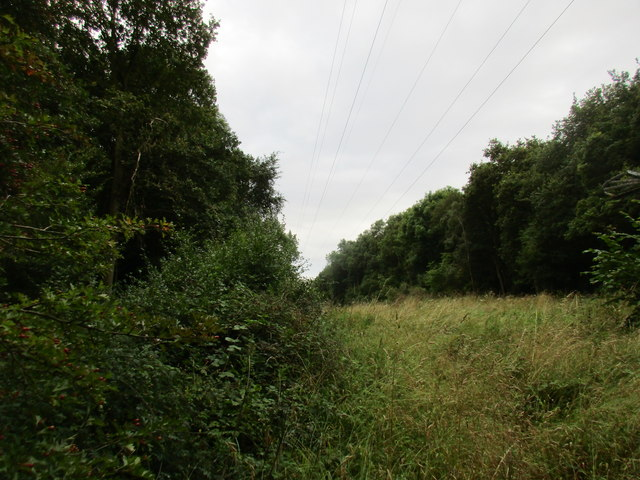 Gap between Mather Wood and Coppice Wood