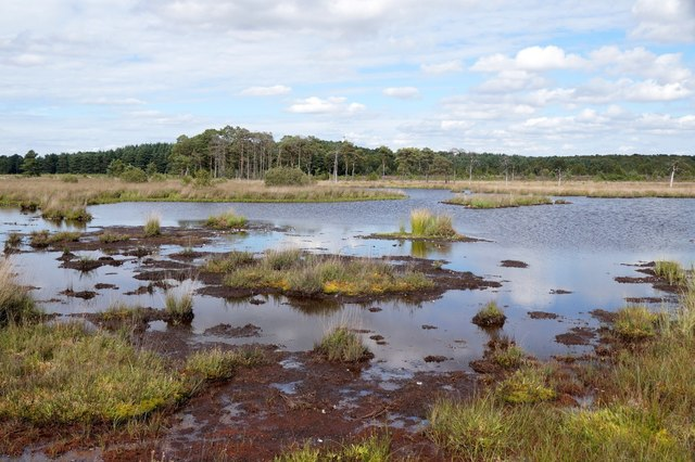Pudmore Pond on Thursley Common