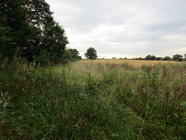 Overgrown field edge near Mather Wood