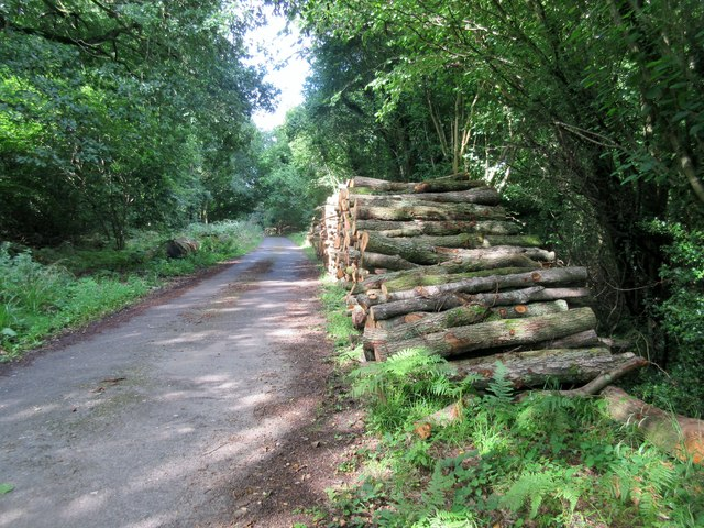 Log stack next to Footpath