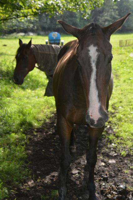 Neath Port Talbot : Horses
