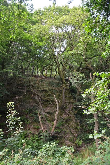 Neath Port Talbot : Woodland