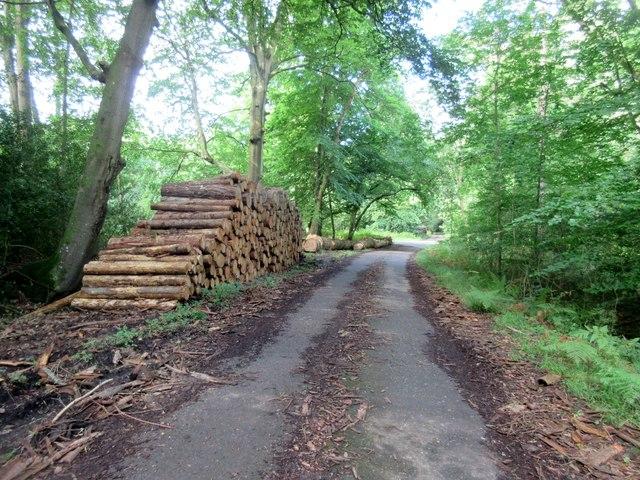 Log stack in Pheasant Copse