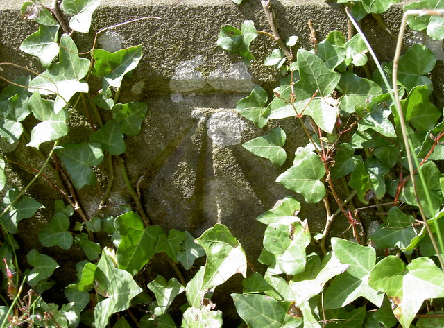 Benchmark under the ivy