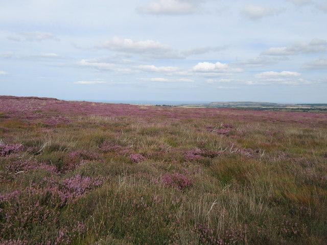 Stanghow Moor