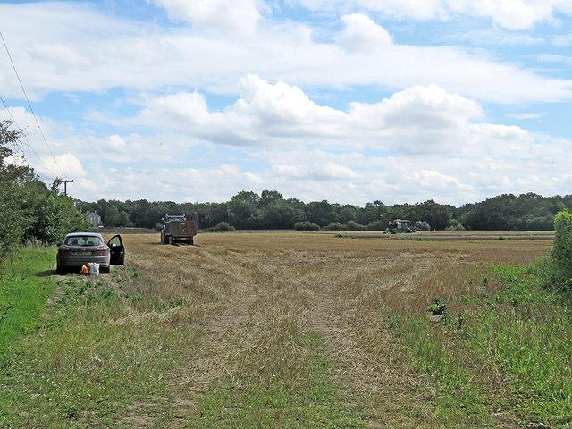Fulbourn: harvest time