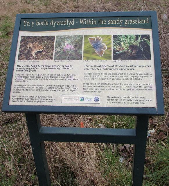 Yn y borfa dywodlyd/Within the sandy grassland, Prestatyn