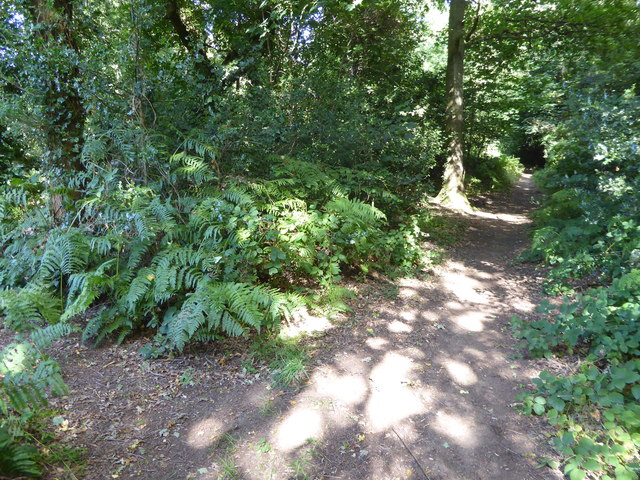 Woodland path parallel with the Greensand Way