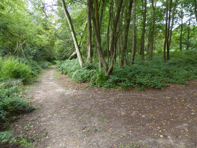 London Countryway in Surrey (23)