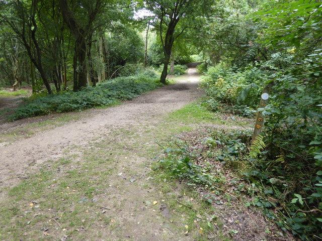 London Countryway in Surrey (24)