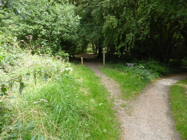 London Countryway in Surrey (25)