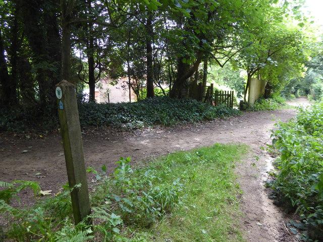 London Countryway in Surrey (27)