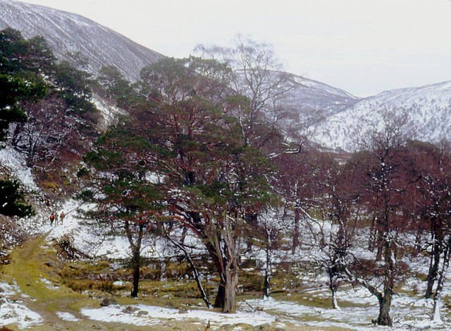Path through the pines in Glen Feshie