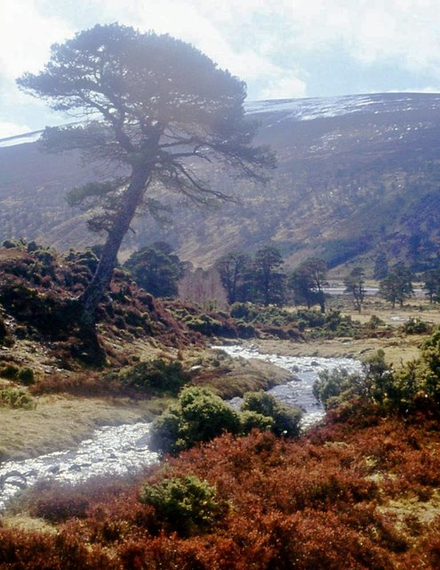 Rushing Allt Coire Chaoil reaches Glen Feshie