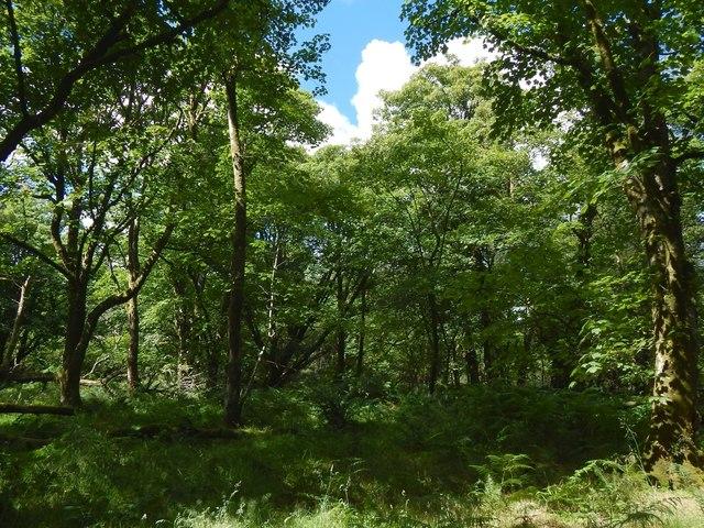 Ardencaple Wood