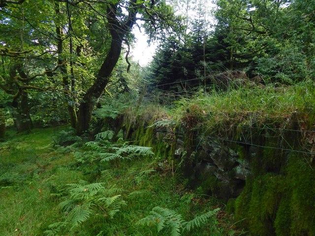 Dry-stone wall in Ardencaple Wood