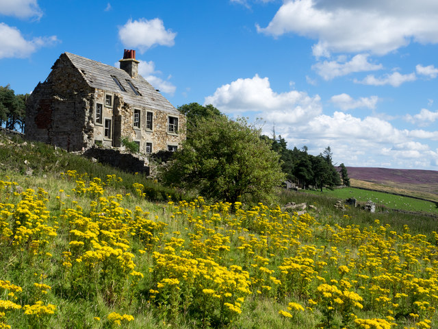 Riddlehamhope with ragwort