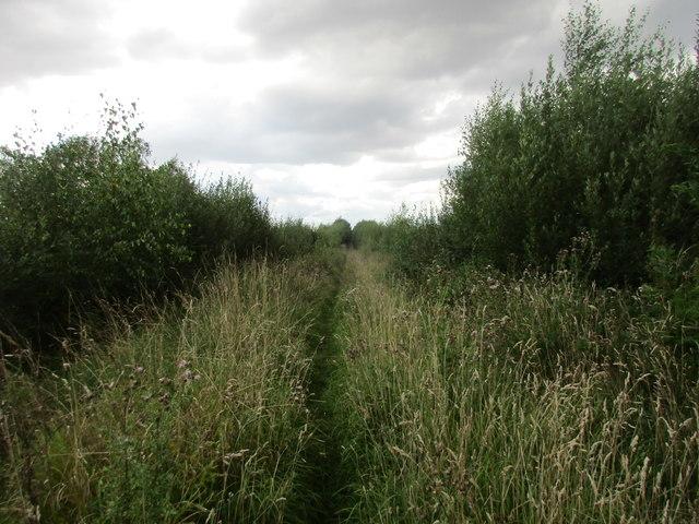 Track across Goole Moors