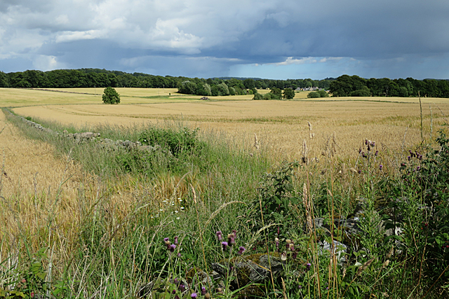 Fields near Cairnley