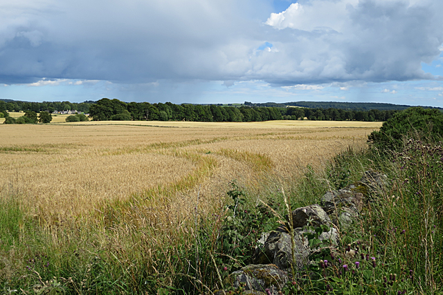 Fields near Cairnley