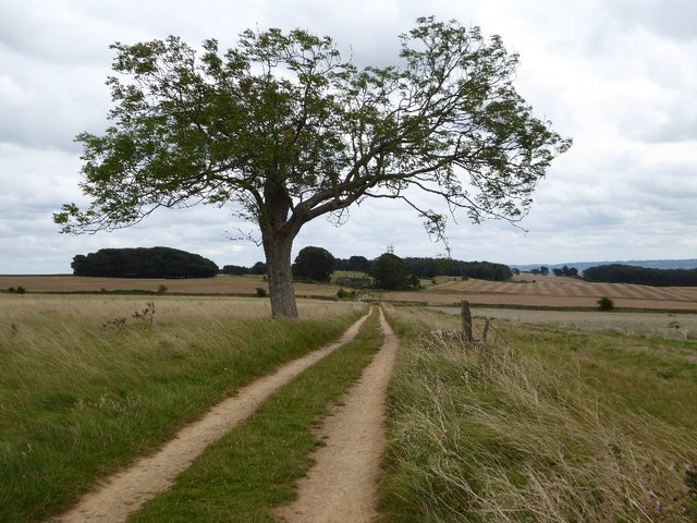 Track and tree on Bredon Hill