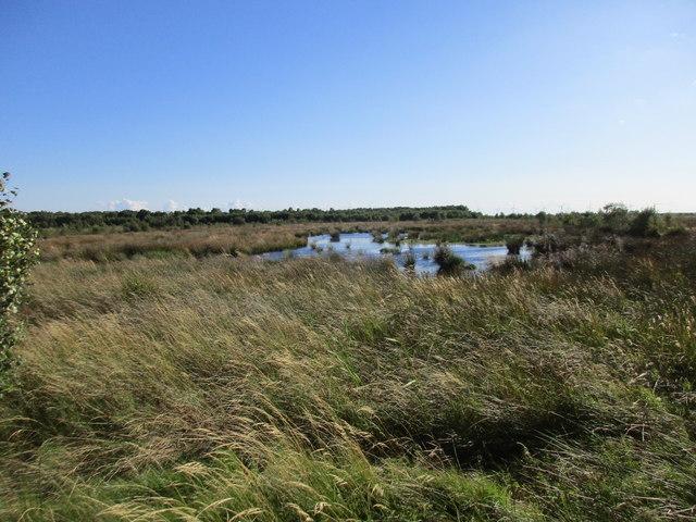 Peat bog, Goole Moors