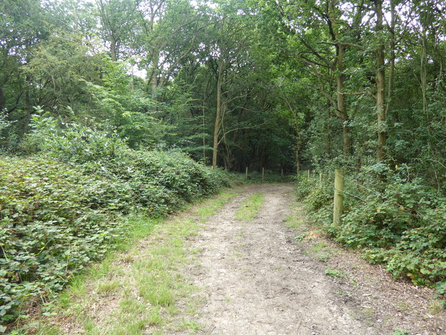 Path into the woodland in Havering Country Park