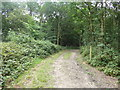 TQ5092 : Path into the woodland in Havering Country Park by Marathon