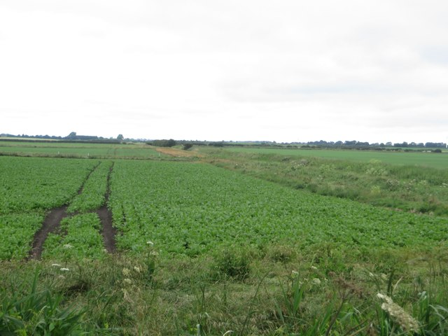 Arable land beside the Leven Canal