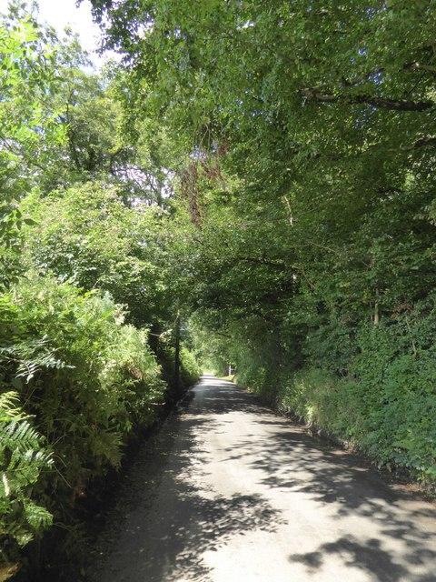 Farley Plantation, near Highgate