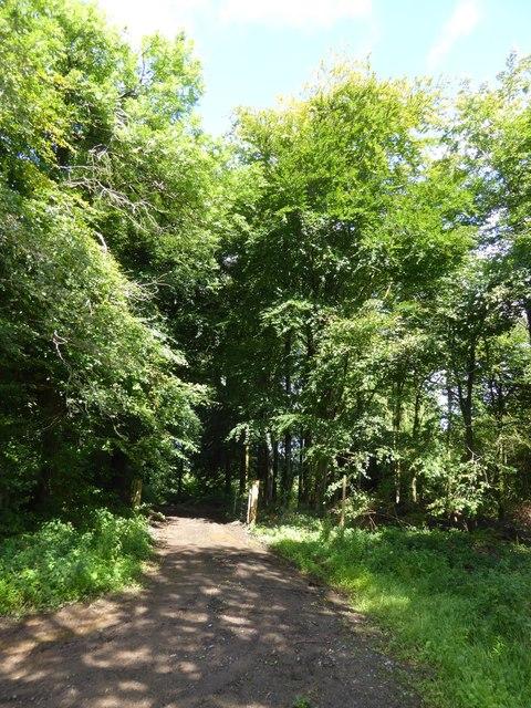 Track into Prescottmoor Plantation