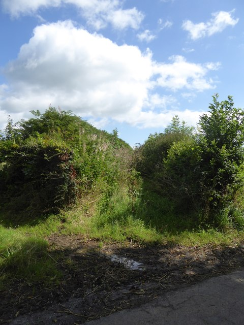 Overgrown track near Lythe-land