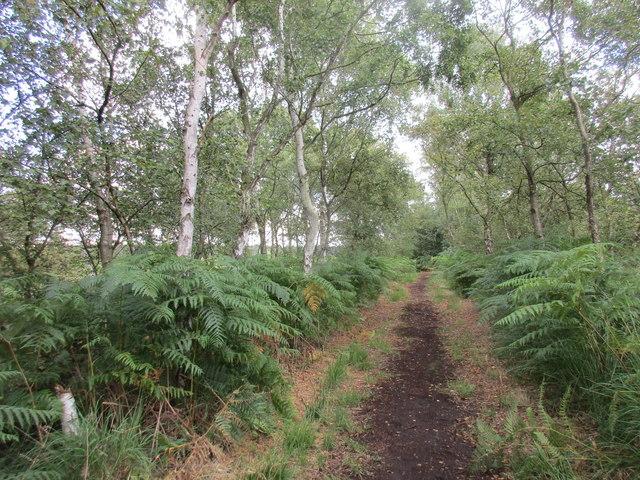 The Peatlands Way on Crowle Moors