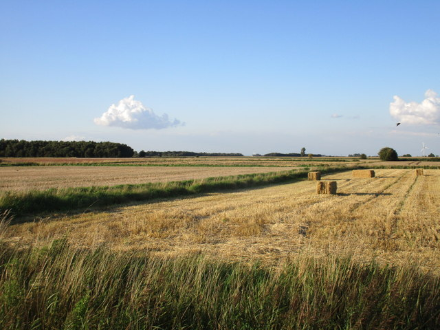 Harvested fields, Crowle Common