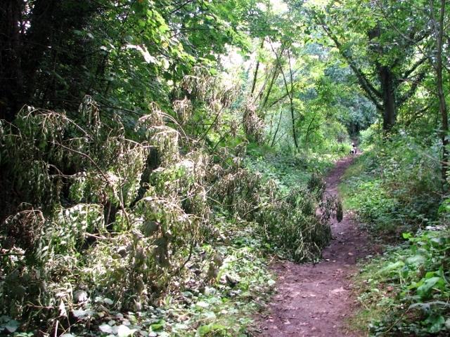 A fallen tree beside the path