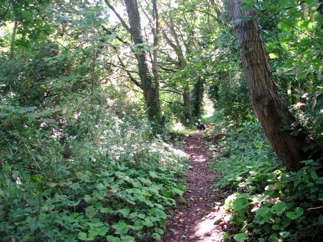 Shaded path through Church Fen