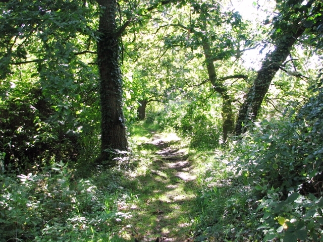 A path in Church Fen