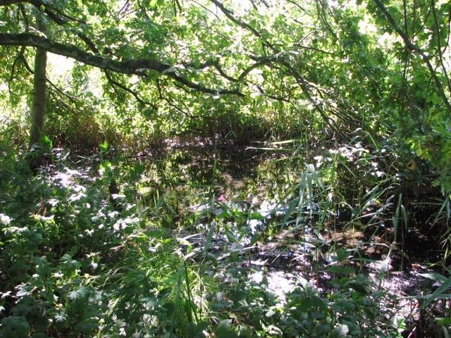 Swampy carr