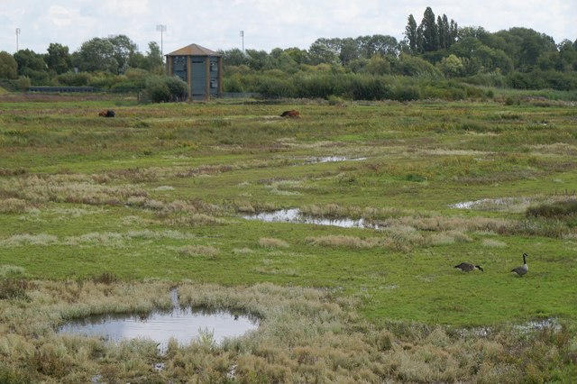 The grazing marsh at the London Wetland Centre, Barnes