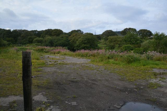 Bryn : Grassy Field